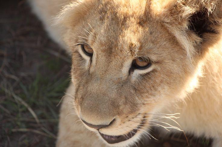 Kaluma @ Tenikwa Wildlife Centre
