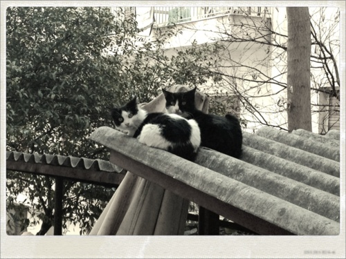 Cute cats in the backyard!