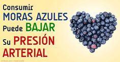 Una investigación revela que las personas que comen moras azules son propensas a tener presión arterial más baja que los que no comen esta fruta todos los días. http://articulos.mercola.com/sitios/articulos/archivo/2015/02/02/las-moras-azules-ayudan-a-bajar-la-presion-alta.aspx