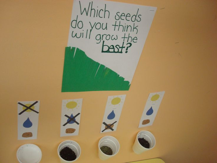 What do plants need to grow? PreK class experiment and prediction center
