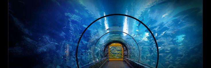 15 Must See Reef Aquarium Pins Saltwater Aquarium