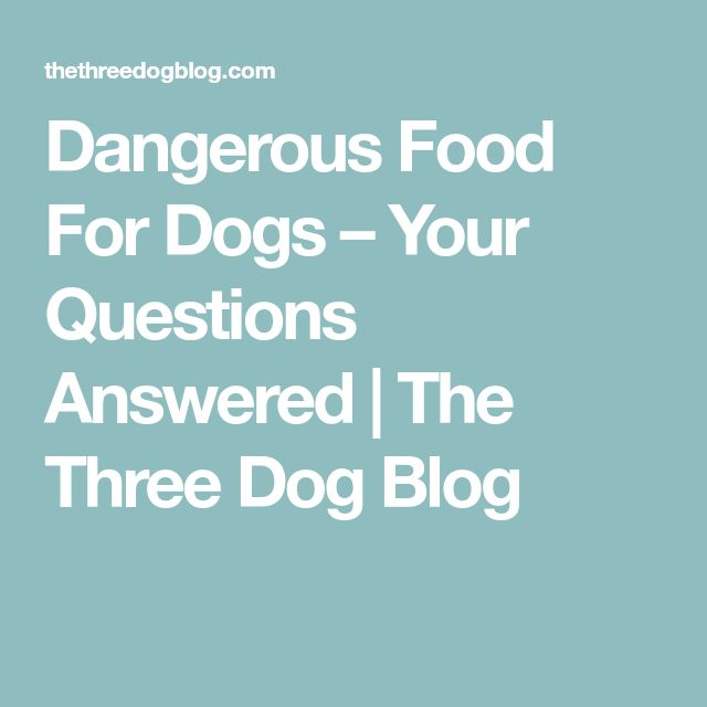 Dangerous Food For Dogs – Your Questions Answered | The Three Dog Blog