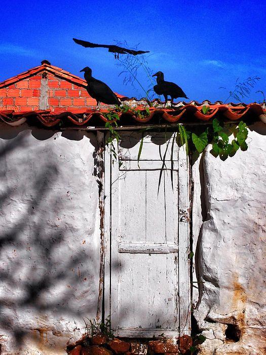 """Amigos Negros"" Photograph ~ Barichara, Colombia © 2012 Skip Hunt $122"