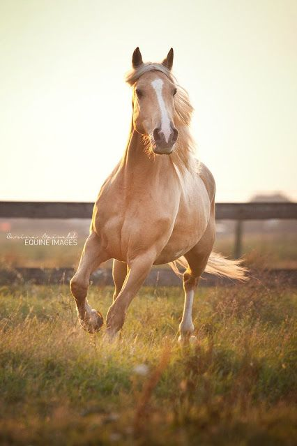 Palomino Caballos Horses Beautiful Horses Y Animals