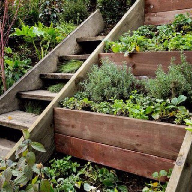 Reduced Front Steps Flanked With Multi Tiered Planter Boxes For Veggies And  Herbs