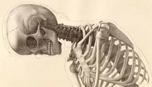 human anatomy art - Google Search