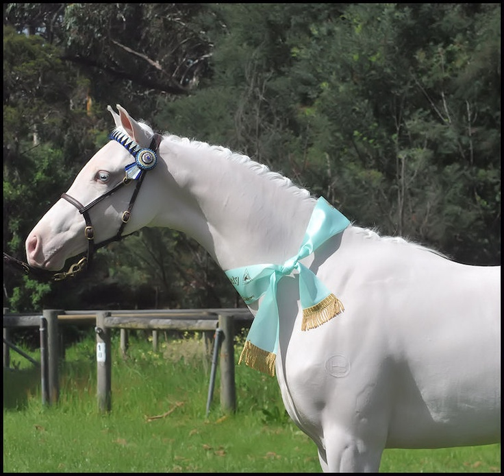 Quicksilver in Show mode, at his first outing.