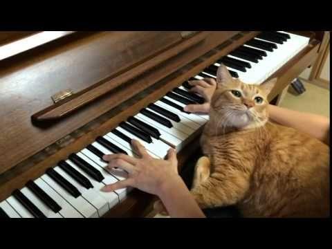 幻想即興曲 ピアノ演奏中にネコ乱入!
