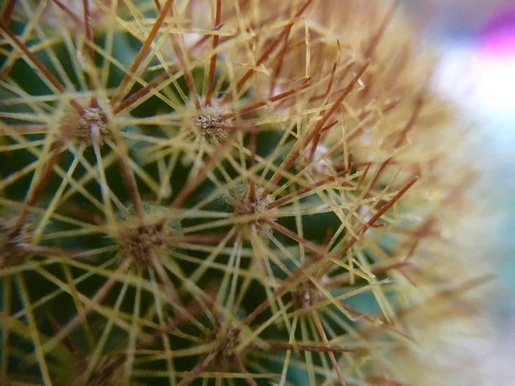 #macro #plant #cactus