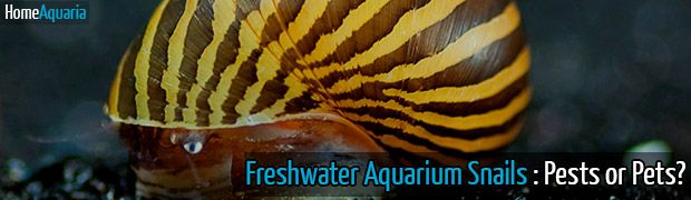 Freshwater Aquarium Snails: Pests or Pets?