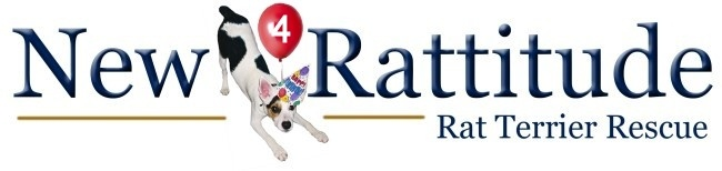 Image for New Rattitude Rat Terrier Rescue