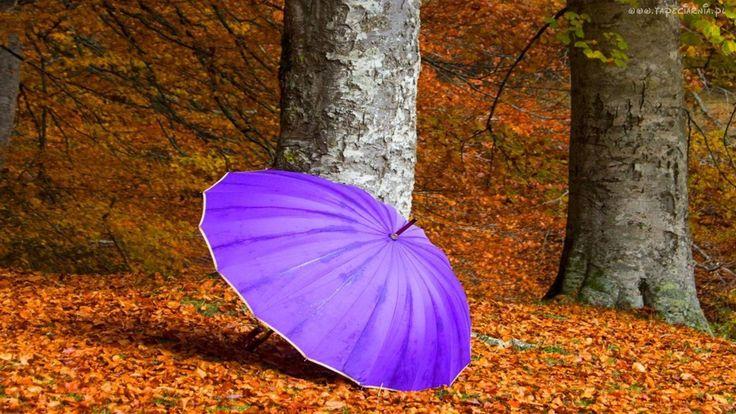 Drzewa, Liście, Fioletowy, Parasol