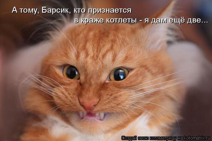 Свежая котоматрица поднимет настроение вмиг. Обсуждение на LiveInternet - Российский Сервис Онлайн-Дневников