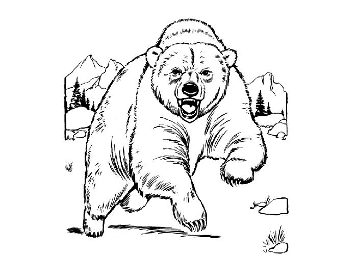 Grizzly bear cubs drawing - photo#8