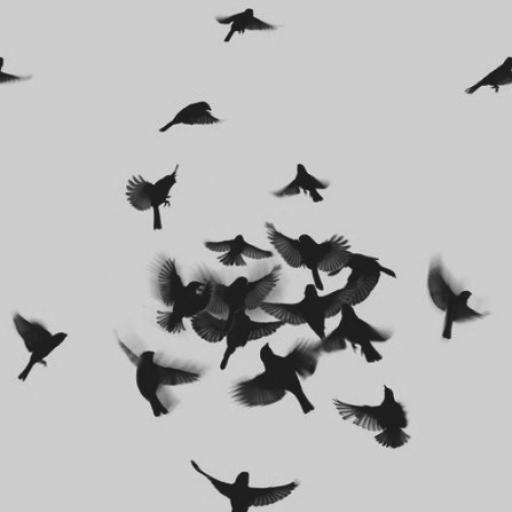 Aqui poderei desabafar , dizer o que sinto e dar minha opnião sobre algo. Estou disposta a receber sugestões.  Criticas criativas são sempre bem vindas.  Se você quiser me criticar para atingir vá em frente , já me acostumei , não tenha nada que já não tenha ouvido que vá me deixar mais para baixo. E ainda mais você não me conheçe , e esta aqui por que quer.     M. #diferente #fatos #frases #otimismo #otimista #pessimismo #pessimista #relax #sendo #uma #uma pessimista sendo otimista