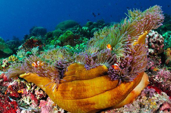 Bunaken National Park.. Enjoy your diving here.