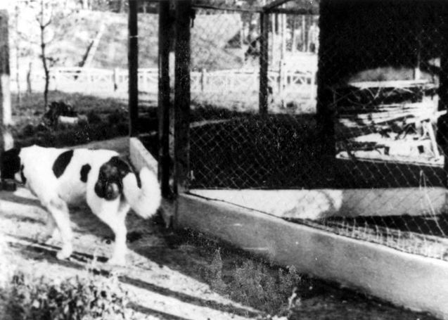 Barry, dog of Kurt Franz, Deputy Commandant of Treblinka, used to sic upon the prisoners.