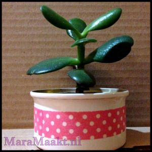 upcycle: empty cat food can to planter