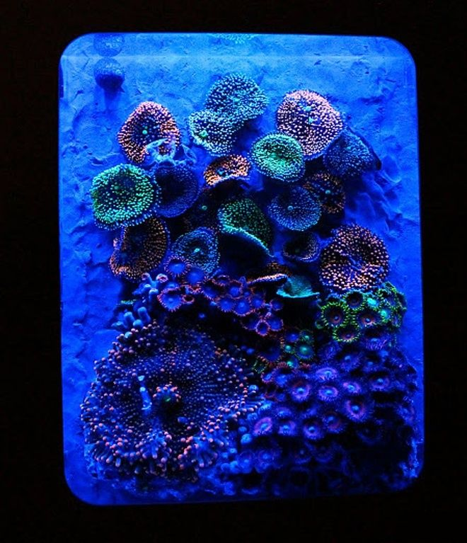 XBOX 360 Pico-Reef Aquarium BY Blue World Aquariums