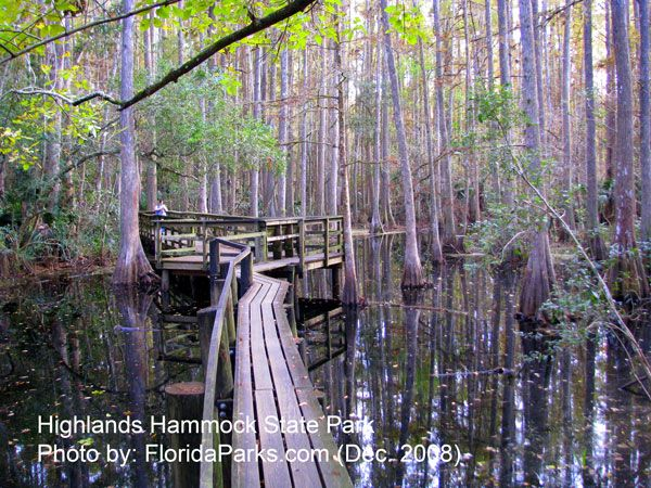 Highlands Hammock State Park, Sebring Florida You walk through the everglades here. I use to live near here.