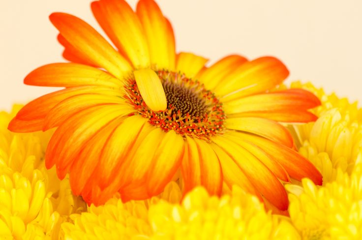 perfection in the imperfect, flower sunset - perfection in the imperfect, flower sunset