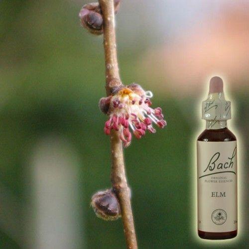 14 Best Sante Fleurs De Bach Images On Pinterest Bach Flowers