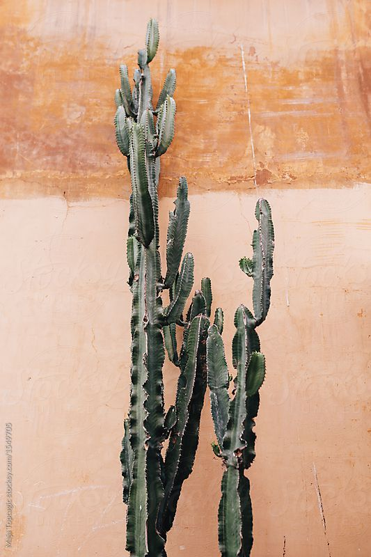 Cactus against orange wall by Maja Topcagic for Stocksy United