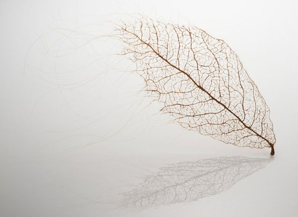 Jenine Shereos created a unique series of leaves from human hair that she stitched together by hand.