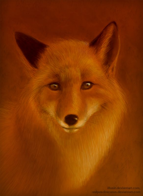 The fire fox by VulpesObscurus.deviantart.com on @deviantART
