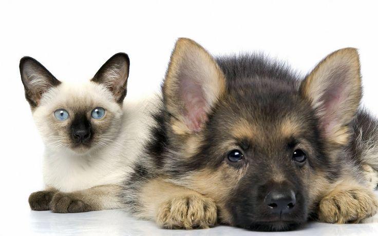 Sååå søte ❤️ Frihetens arv, www.frihetensarv.no, Katt, Morsom katt, Søt katt, Hund, Hundetrening, Morsom hund, Hund og katt, Kjæledyr, Søt hud, Vakker hund, Valp, Kattunge, Lek, Quotes
