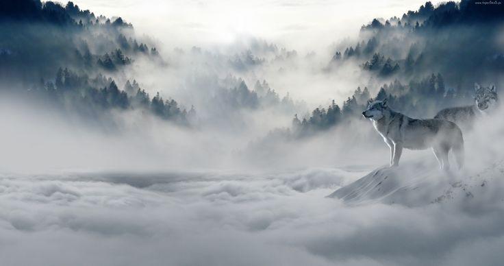 Mgła, Wilki