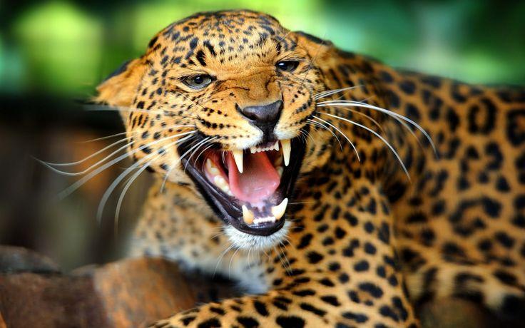 Jaguar: Company History, Current Models, Interesting Facts ...