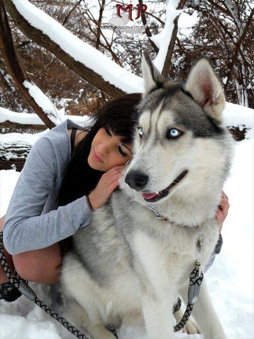 Raise an Alaskan Malamute/Siberian Husky | My puppies ...
