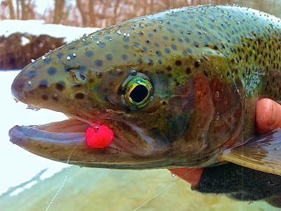 9 best images about fly fishing on pinterest fishing for Erie steelhead fishing report
