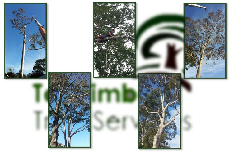 Check out affordable tree services that answers all tree demand. visit our website https://talltimberstreeservices.com.au/ or call us 0414 627 627