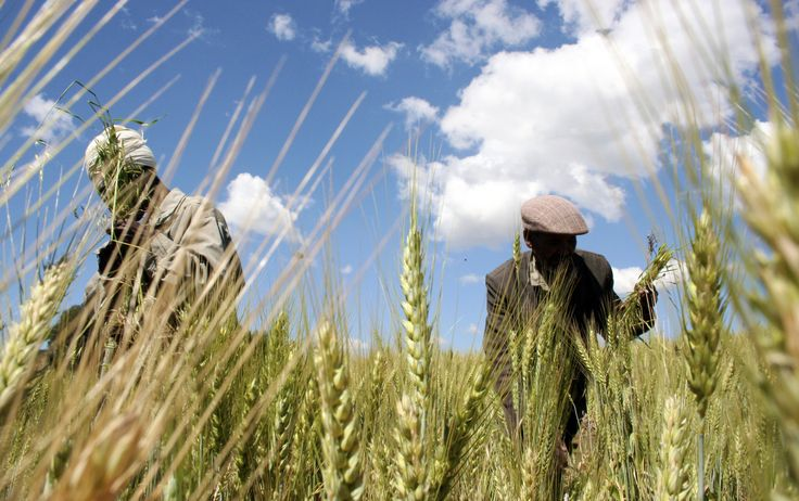 Why local farmers are key to food security in Africa