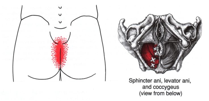 Pelvic Floor | The Trigger Point & Referred Pain Guide