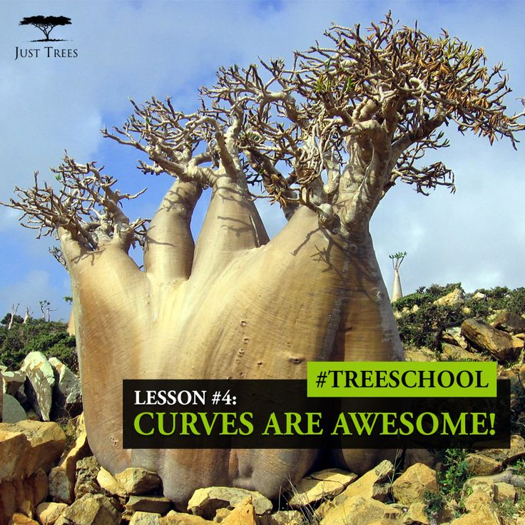 Lesson 4: Curves are awesome! #TreeSchool