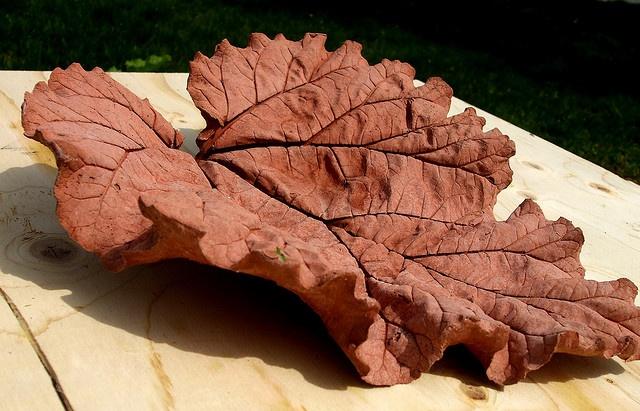 concrete rhubarb leaf: Gardens Ideas, Concrete Leaves, Crafts Ideas, Rhubarb Leaf, Gardens Decor, Cement Leaves, Concrete Rhubarb, Leaf Tutorials, Concrete Leaf