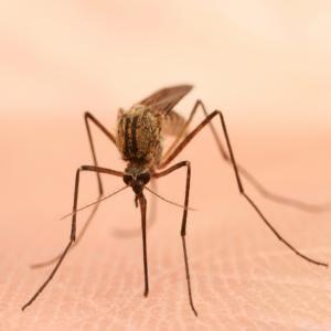 Cómo ahuyentar mosquitos con limón - olvídate de las picaduras