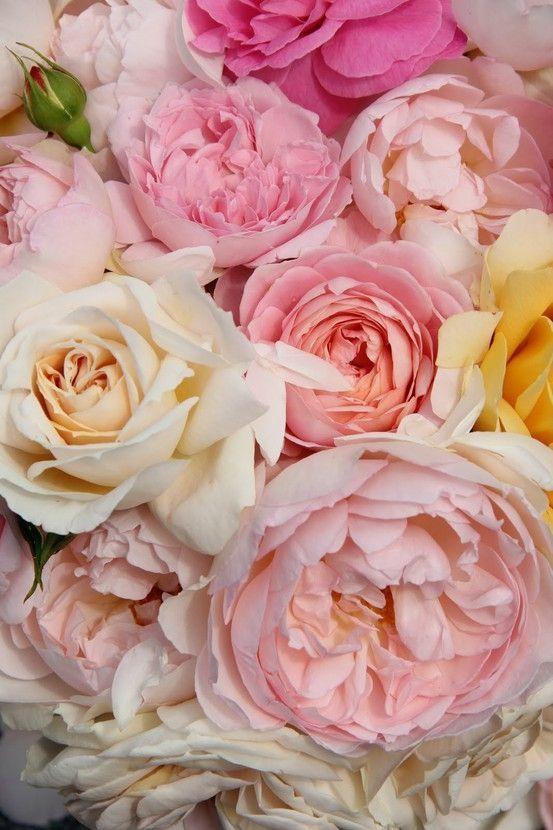 Me encantan las rosas en esos tonos