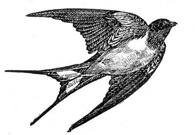Free Clip Art of a Swallow - this site has multiple different black and white birds as free downloads.