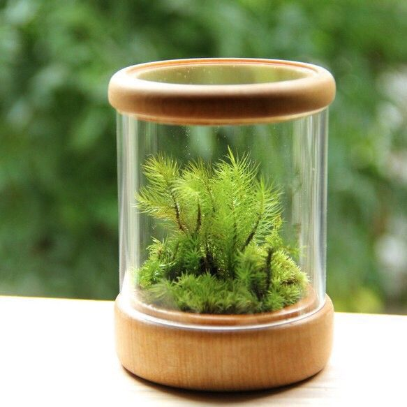creator: 苔むすび| [ Creema ]こけ小箱 -苔テラリウム×木工-