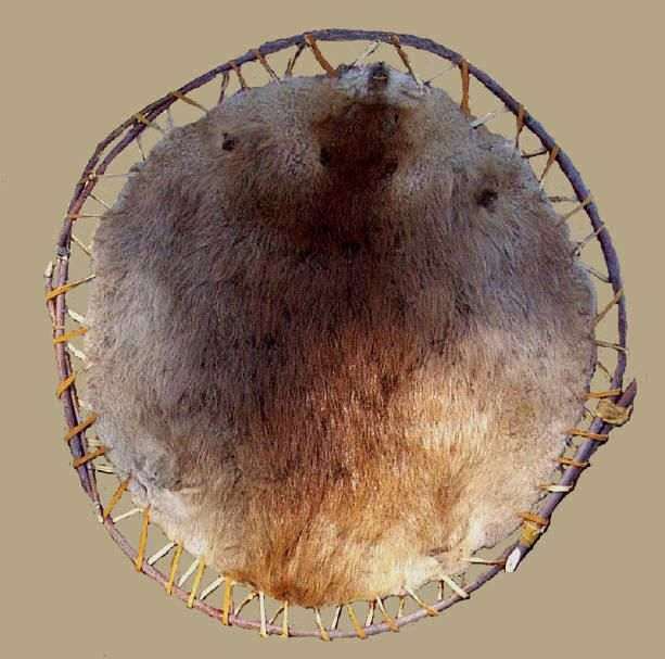 Beaver pelt, stretched on a willow frame with rawhide.