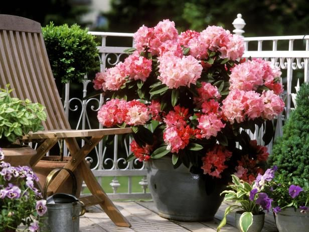 392 best images about CONTAINER Gardens on Pinterest