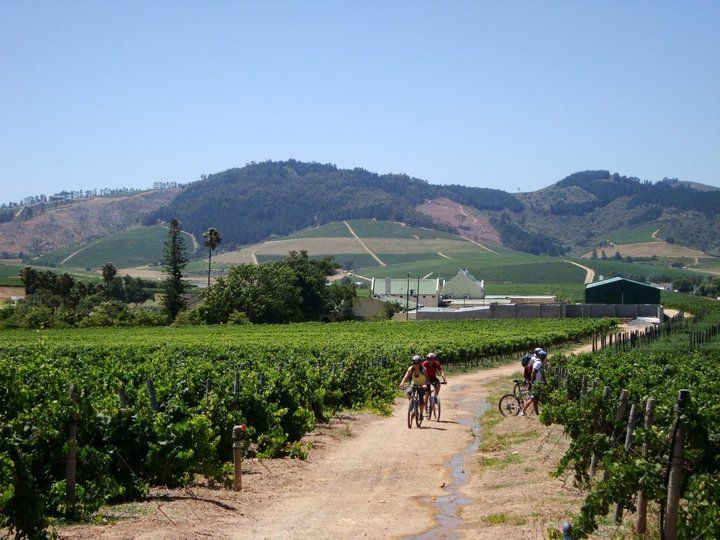 Bike and Wine Tours