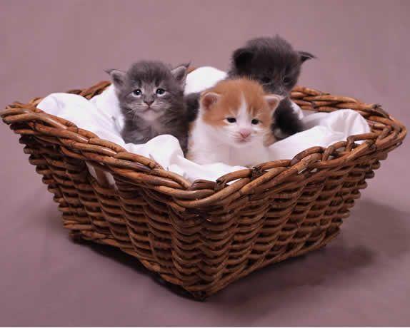 L'allaitement artificiel du chaton - Webzine Animaux de compagnie