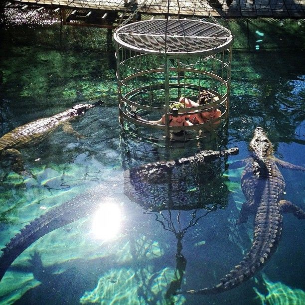 CROCODILE CAGE DIVING! At Cango Wildlife Ranch in Oudtshoorn, South Africa, you can get in a cage and be surrounded by crocodiles! An unforgettable thing to do on the Garden Route. Stay clear of the edges, because they like to stick their noses in... Discovered by Adventurous Kate at Cango Wildlife Ranch, Oudtshoorn, South Africa #travel #adventure
