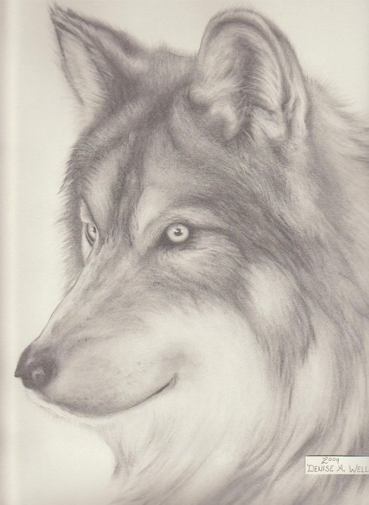 165 best wolf drawings images on pinterest wolf drawings pencil drawings of anime wolf drawing denise a wells by deniseawells on ccuart Images