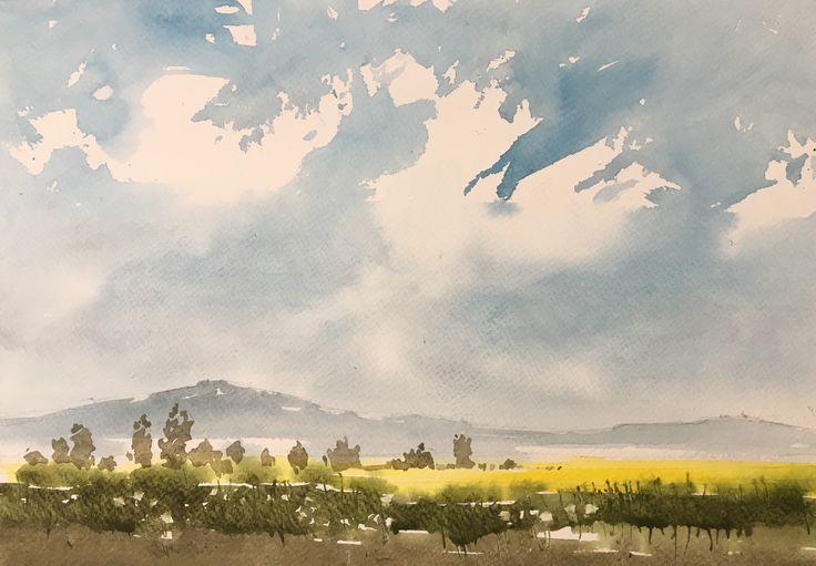 Canola Field. Watercolor.
